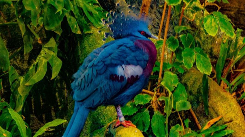 Bird Bird Photography Birds Of EyeEm  Nice Day Nice Atmosphere Photoshoot Taking Photos Hello World Blue Beautiful Zoo Colorful Color Portrait Color Explosion January2016