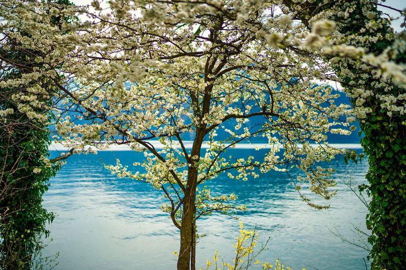 Bloom Nature