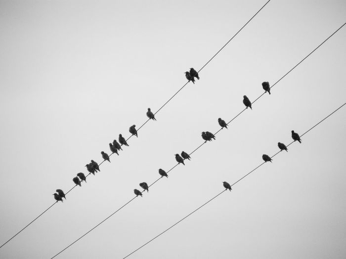 Something Beautiful Remains Wires Telephone Wires Birds On Wire Starlings Starlings On Wires Silhouettes Birds Bird Photography A Gathering Resting Birds Resting