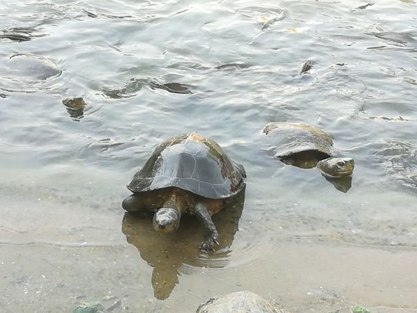 Turtle in the park Water Swimming Underwater Sea Outdoors Nature Animal Themes Day No People Beach Beauty In Nature Sea Life UnderSea turtle Animal Wildlife Animal Park