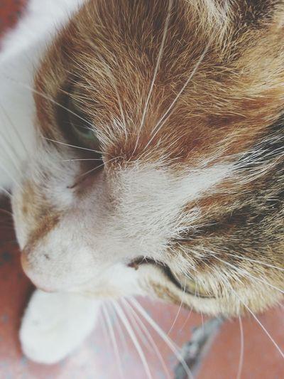 I Love Cats Cat Relaxing Enjoy Life (´Д`)