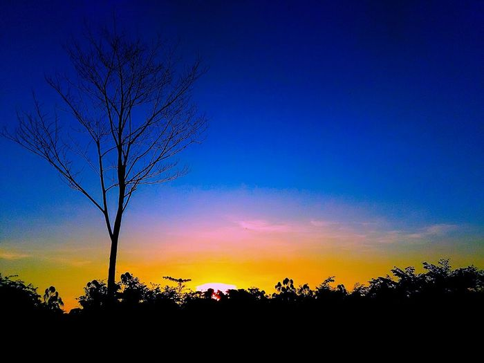 Just tree Trees And Nature Sunrise Beauty In Nature Landscape Blue Sky Colorsky Skylight Dramatic Sky in Blitar INDONESIA