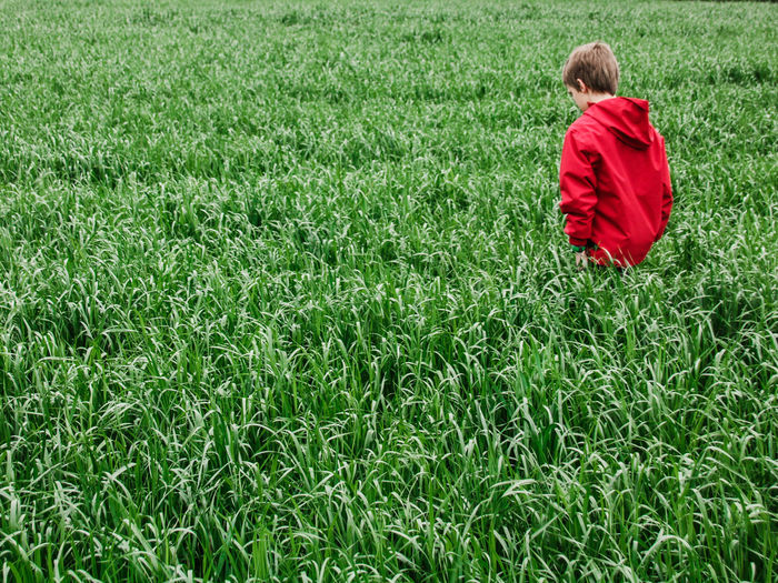 Rear view of boy on grassy field