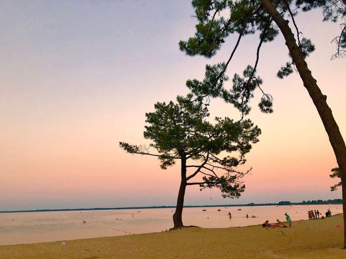 Sky Tree Water Sunset Beauty In Nature Plant The Traveler - 2018 EyeEm Awards Beach Sea Scenics - Nature Tranquil Scene Tranquility Clear Sky Horizon Horizon Over Water Nature Land Idyllic