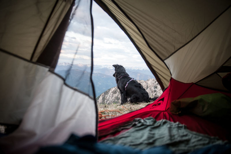 A night outside in the mountains with my best buddy Tent One Animal Transportation Camping Mode Of Transportation Adventure Day Animal Themes Animal Nature Textile Vertebrate Mammal No People Selective Focus Sky Domestic Animals Travel Pets Outdoors Dogs Camping