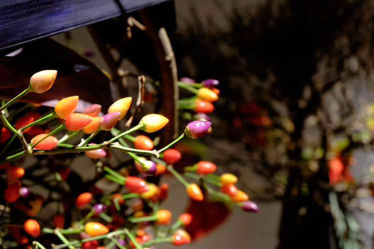 Flower Arrangement Flowers Fujifilm Fujifilm X-E2 Fujifilm_xseries IKEBANA Ikebana Sogetsu Japan JAPANESE FLOWER Arrangement 生け花 草月