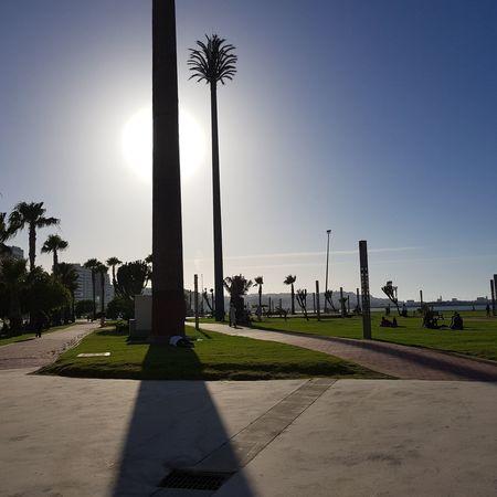 Palmeras Paseo Maritimo Marruecos Moroco Playa Beautiful Palm Tree Memorial No People Tree Sky Shadow Outdoors War Day Grass Military