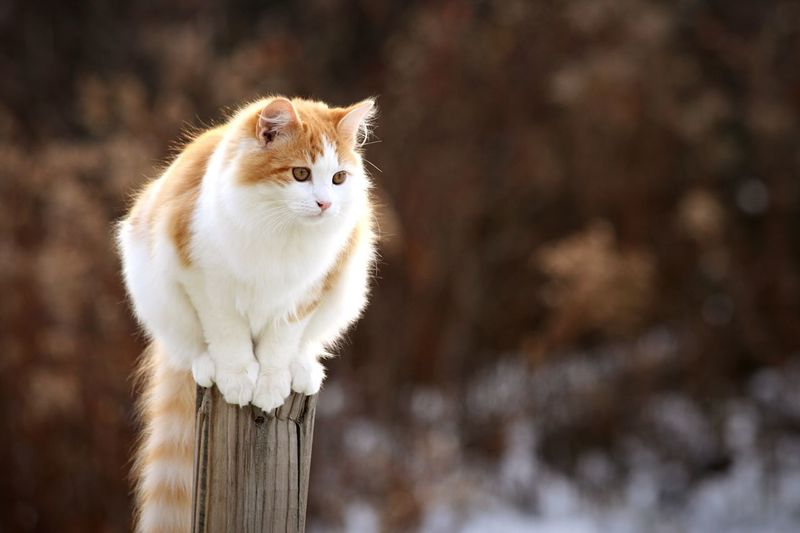 Sitting Cat♡ Post No People Nature Day Outdoors Looking Away Looking Fall Fall Beauty Fall Colors Orange Color White Color Warm Colors Light Snow First Snowfall Focused