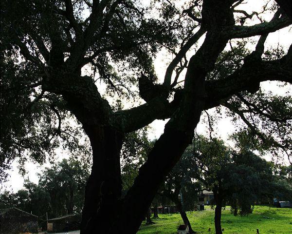 Love me some treebeards. The Mountains Explore Huelva Farm