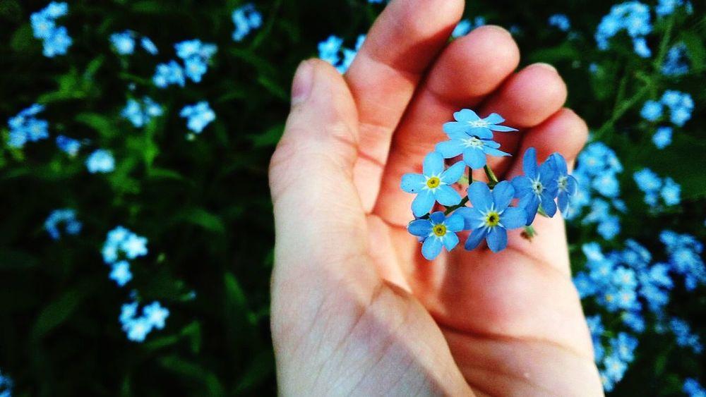 цветы голубой лес и природа