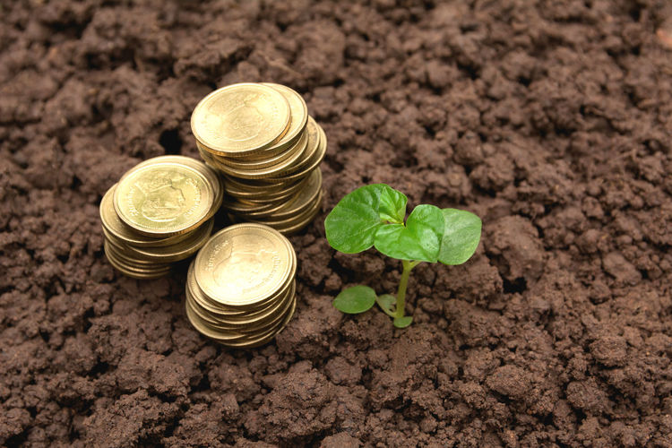 Beginnings Business Coin Container Currency Dirt Economy Finance Food Food And Drink Gardening Gold Colored Growth High Angle View Investment Jar Leaf Nature No People Plant Part Savings Wealth