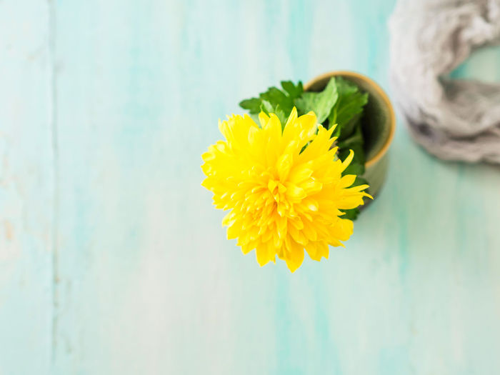 High angle view of yellow flower in vase on table