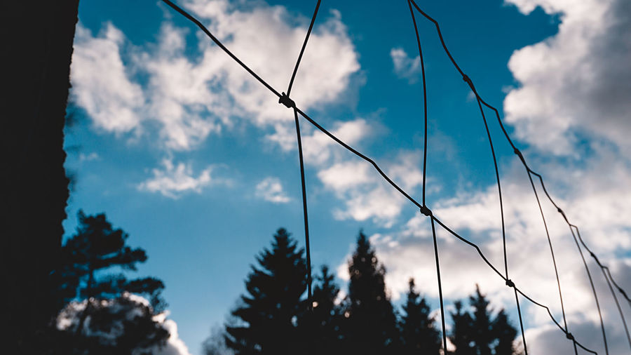 Sky Cloud - Sky Tree Low Angle View Plant Nature No People Growth Silhouette Beauty In Nature Day Focus On Foreground Tranquility Outdoors Blue Tranquil Scene Scenics - Nature Sunlight Close-up Forest Coniferous Tree EyeEm Best Shots EyeEm Selects EyeEm Gallery My Best Photo