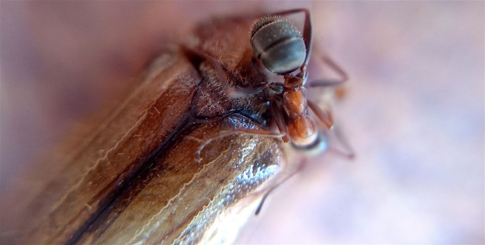 Survival Animal Themes Animal Wildlife Animals In The Wild Ant Close-up Day Housefly Insect Nature No People One Animal Outdoors Survival Wildlife EyeEmNewHere