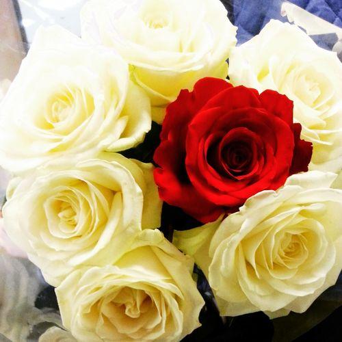 Rose🌹 Red&white Birhday Friends Gift