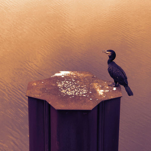#cormorant10 Bird Photography Cormorant  Duisburg Duisburg Innenhafen Kormoran Nature Photography The Week On EyeEm Water Reflections Animal Themes Animal Wildlife Animals In The Wild Bird Close-up Day Habour Nature No People One Animal Outdoors Water Cormorant  Wildlife