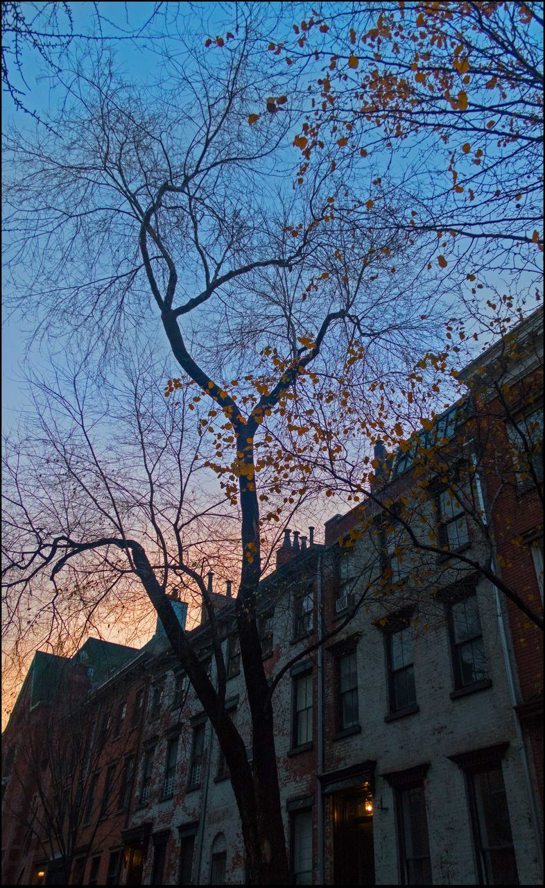 architecture, building exterior, tree, low angle view, built structure, branch, bare tree, no people, outdoors, sky, day, nature, city
