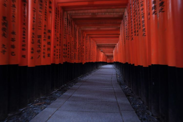 日本 京都 伏見稲荷大社 #shrine #kyoto #神社 The Way Forward Orange Color Shrine Architecture Place Of Worship Spirituality Colour Your Horizn