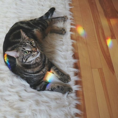 Rainbow Kitty Prisms Rainbows 😚 Cat Bestie  Cats > People Lovebug Lazy Days E-M10