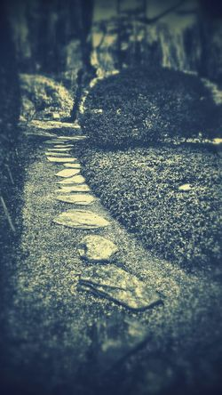 Moonlit Path, romantic, undisturbed, mysterious turn the bend and poof you vanish into endless enchantment! Vanishing Point Landscape_Collection Melancholic Landscapes Natur On The Path Light And Shadow Peace And Quiet Hidden Gardens Black And White
