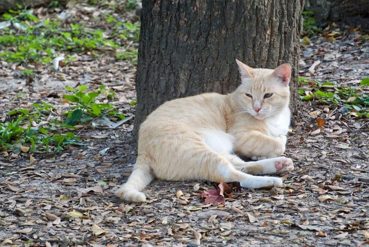 Animal Themes Animal Mammal Cat Pets One Animal Feline Vertebrate Domestic Domestic Cat Domestic Animals No People Tree Trunk Plant Part Day Leaf Land Trunk Nature Tree Ginger Cat Whisker