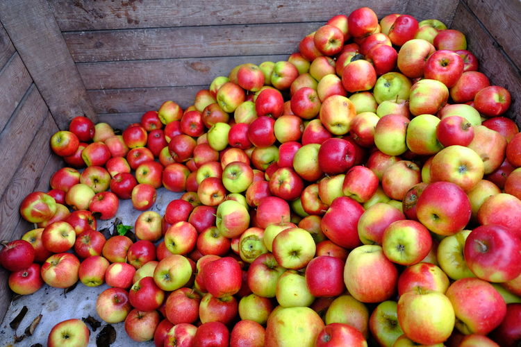 Agriculture Fruits And Vegetables Agriculture Apple - Fruit Apples Food Food And Drink Food Market Food Markets Freshness Fruit Fruit Market Fruit Photography Fruits Healthy Eating Large Group Of Objects Lots Of Apples Many Apples