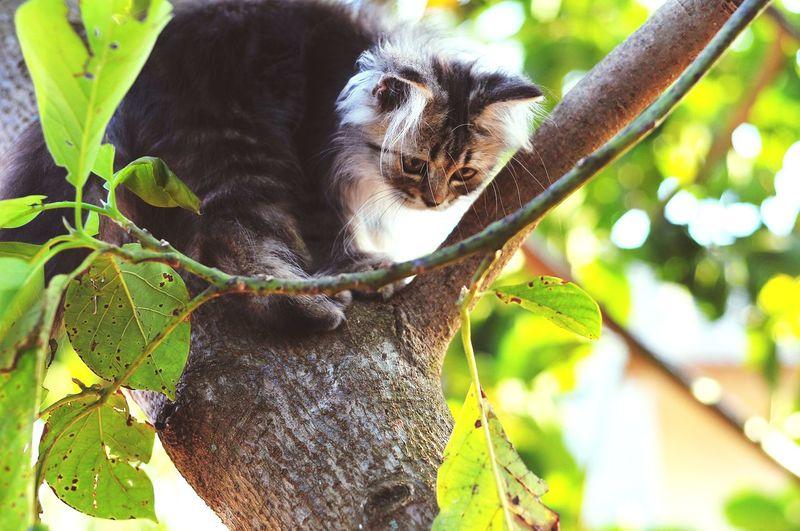 Animal Themes Persian Cat  Cat Lovers Cats Of EyeEm Cats 🐱 Cat Kitten 🐱 Kitten Tree Leaf Close-up