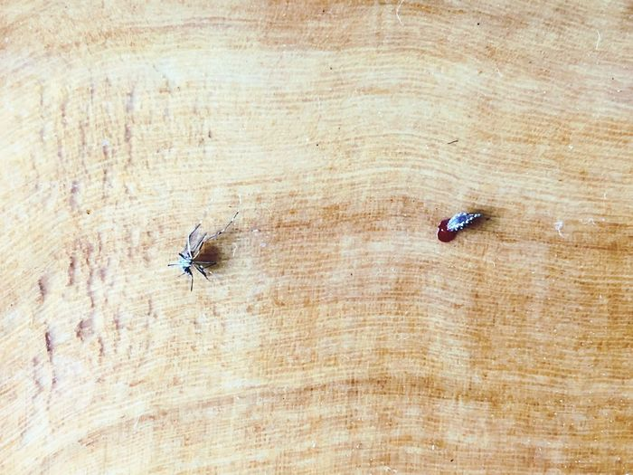 A half of mosquito with blood. EyeEm Selects Wood - Material High Angle View No People Textured  Insect Animal Invertebrate Day Animal Themes Animal Wildlife Directly Above Table Brown