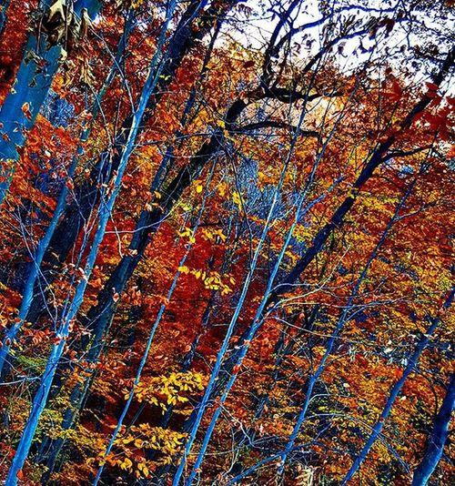AWalkInTheWoods Trees Fall Hike Naturephotography Naturalworld