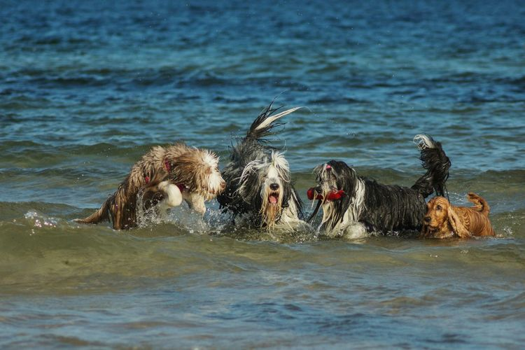 Dogs Walking In Water At Shore