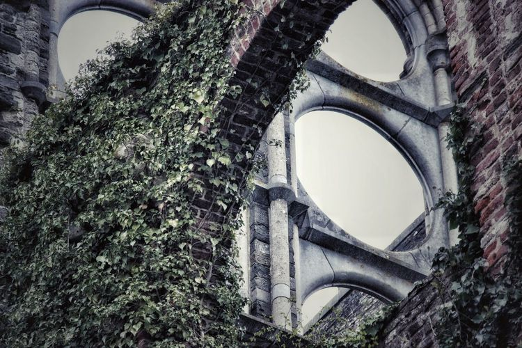 Urbex Leaf Ivy Abandoned Tourism Gothic Style Historic No People Outdoors Photooftheday Green Color Autumn Popular Photos Popular EyeEm Best Shots EyeEm Selects EyeEm Gallery Detail Circle Brick Wall Window History Arch Architecture Close-up Sky Built Structure Cathedral Church Damaged