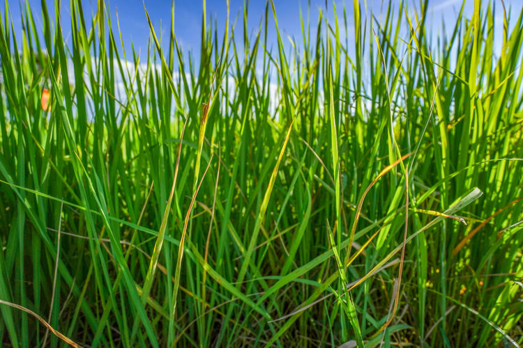 Close-up of fresh green field against sky