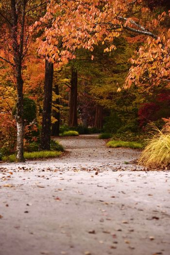 Pathway to serenity Autumn Change Nature Leaf Tree The Way Forward Tranquility Beauty In Nature Tranquil Scene Scenics Outdoors Footpath No People Forest Day Road Landscape Growth Walkway Freshness Idyllic Japanese maple