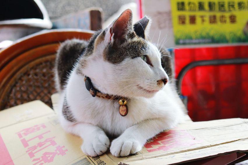 Cat Taipei Trip Photo