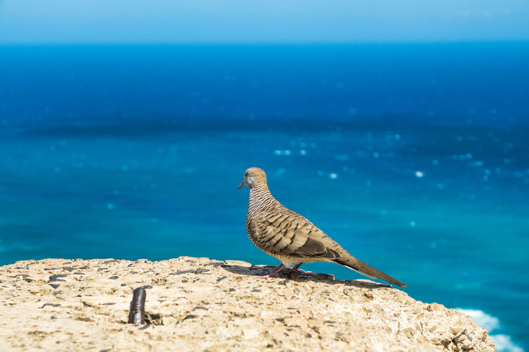 Animal Themes Beauty In Nature Bird Blue Day Nature Outdoors Pacific Ocean Shore Sky The Essence Of Summer Sea And Sky