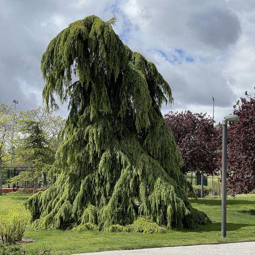 Trees growing in park against sky