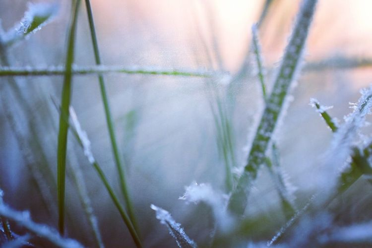 Frost Winter Lowangleview Plant Close-up Nature Growth Beauty In Nature Day Outdoors Winter Cold Temperature Freshness