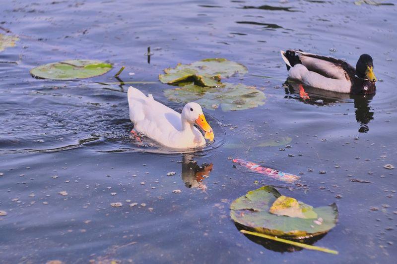 View of ducks swimming on lake