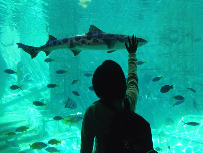 [ Reaching You ] At this moment everything seemed perfect. Magic moment... Animal Animals Aquarium Blue Capture The Moment Communication Emotions Enjoyment Feeling Feelings Fish Human Body Part Magic Magical San Diego Seaworld Shark Touch Touching Underwater Women Blue Wave