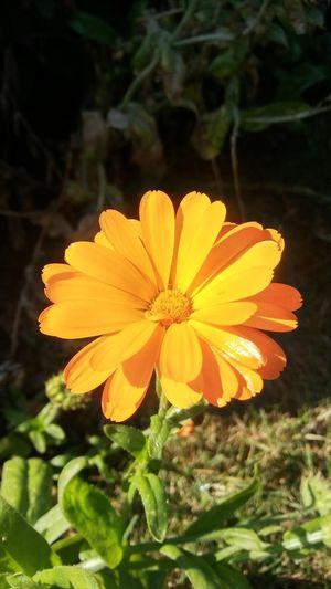 Flower Head Flower Yellow Petal Close-up Plant