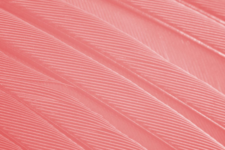 Feather  Full Frame Backgrounds Pattern No People Close-up Pink Color Textured  Day Repetition Textile Red Abstract Striped Indoors  Paper Nature Still Life High Angle View Detail