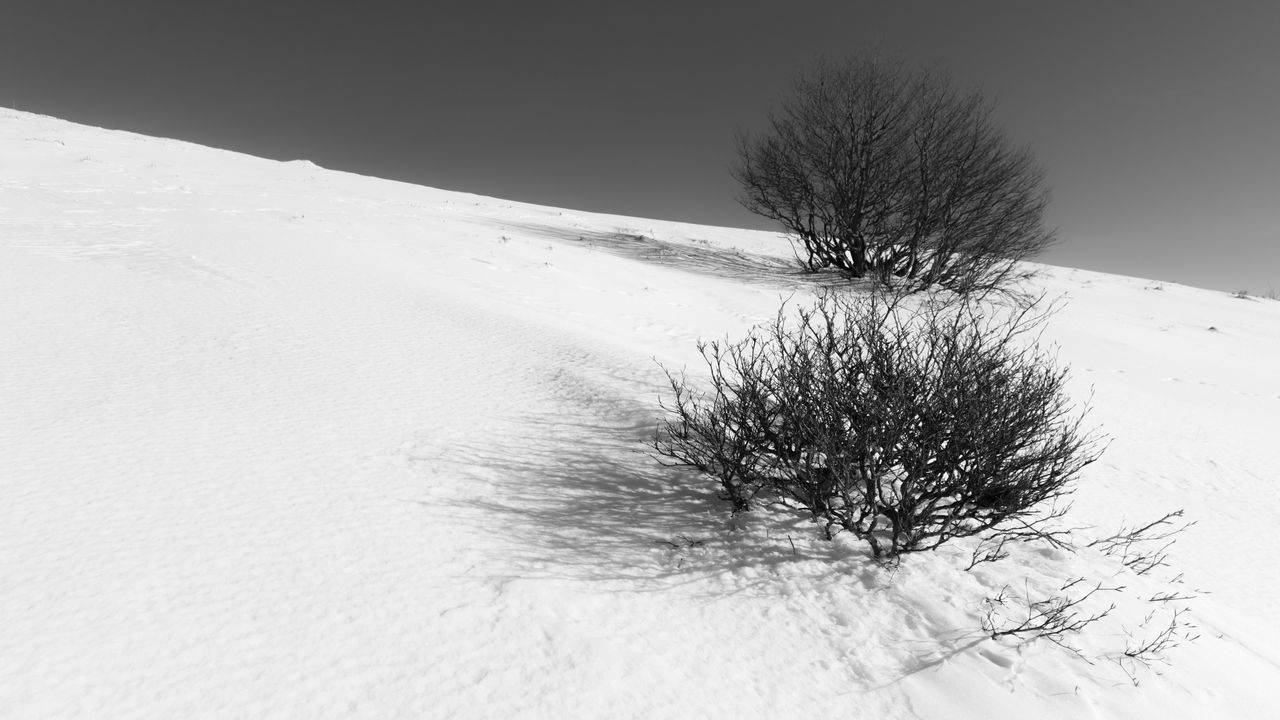 snow, cold temperature, winter, scenics - nature, tranquility, tree, tranquil scene, landscape, land, beauty in nature, environment, plant, bare tree, nature, non-urban scene, no people, field, mountain, day, snowcapped mountain, climate, arid climate