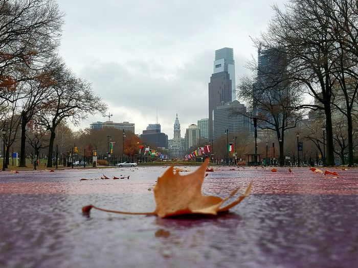 It's a rainy autumn day in the city. City Cold Temperature Outdoors Rainy Day Downtown Autumn🍁🍁🍁 Outdoor Photography Photo Of The Day Skyscrapers Orange Leaves Check This Out Nice Capture Eyemphotography Skyscraper Leaf 🍂