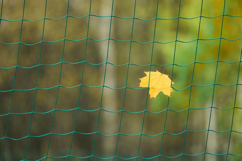 Full frame shot of yellow flowering plant on brick wall