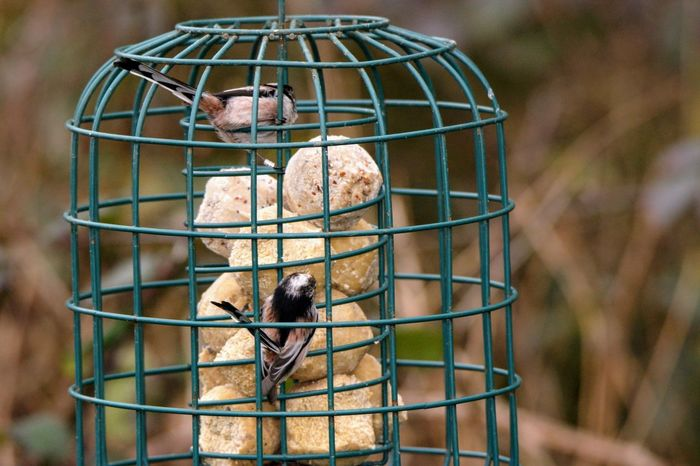 Animal Themes Animal Wildlife Animals In The Wild Bird Bird Table Birdcage Birdfeeder Cage Day Focus On Foreground No People Outdoors Perching Trapped
