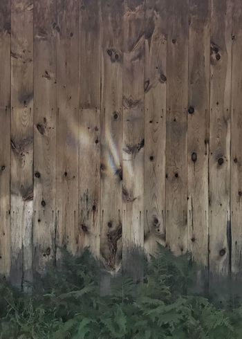 Wood paneled barn with ferns. Backgrounds Wood Panels Barn Wall Ferns Vertical Wood Knots Wood Grain Brown Pine Wood