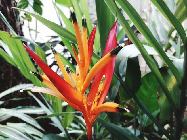 Plant Nature No People Beauty In Nature Orchids EyeEm Nature Lover EyeEm Best Shots - Nature WeekOnEyeEm Celo_teixeira Bothanical Orquideas Orquídea❤ Orange Color
