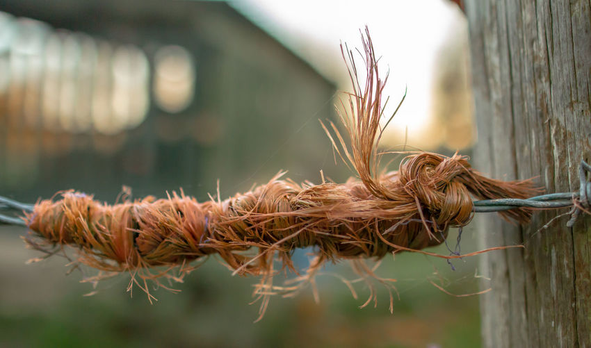Get Knotted Close-up Plant Focus On Foreground Nature Selective Focus Day No People Brown Agriculture Outdoors Growth Feather  Crop  Cereal Plant Straw Wall - Building Feature Grass Dry Rope Swing String Wireless Technology Farm Knotted Wood Knotted Rope