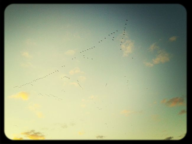 sky, birds, autumn