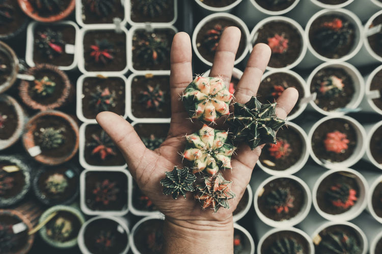 Directly above shot of hand holding potted plant